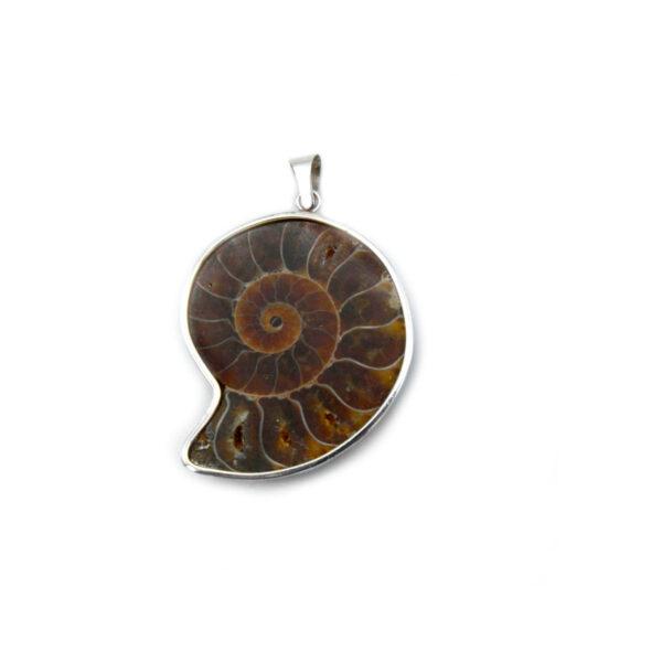 colgante ammonite grande en plata de ley 925